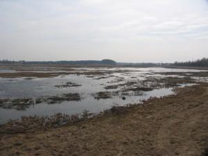 Žemaitiškės pievų balose atvertos erdvės paukščiams veistis | Aukštaitijos NPD archyvo nuotr.