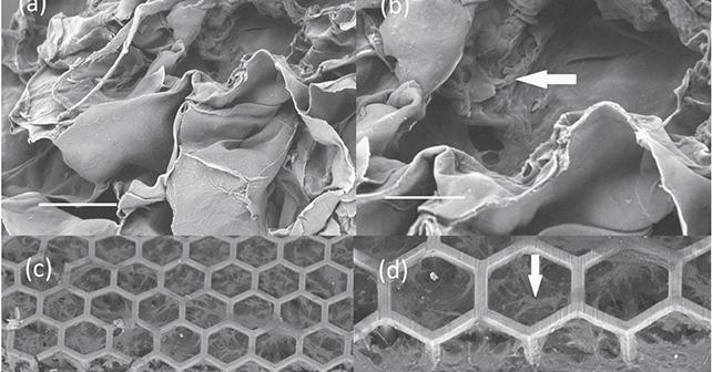 Karkaso vaizdas prieš implantaciją   J. Mačiulaičio iliustracija