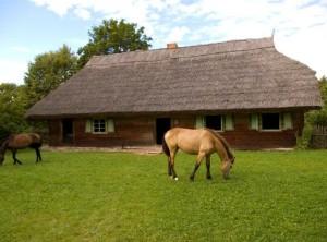 arkliai-llbm.lt