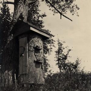 1. Į pušį įkeltas kelminis avilys. F. Barkausko nuotrauka. Nuotrauka iš asmeninės Petro Kaminsko kolekcijos.