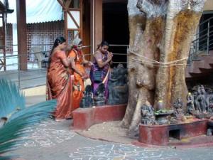 Siūlai, aprišti apie Pipal medį (Maisoras, Karnatakos valstija, Indija) | Alkas.lt, R. Balkutės nuotr.