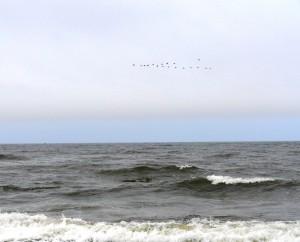 Baltijos jura_Jono V. nuotr
