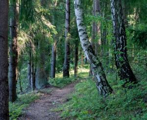 Miškas | E. Drąsučio nuotr.
