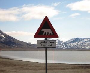 Svalbardas_vestfoldingen.com