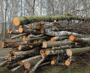 Iškirsti medžiai brazilgeo.com nuotr.