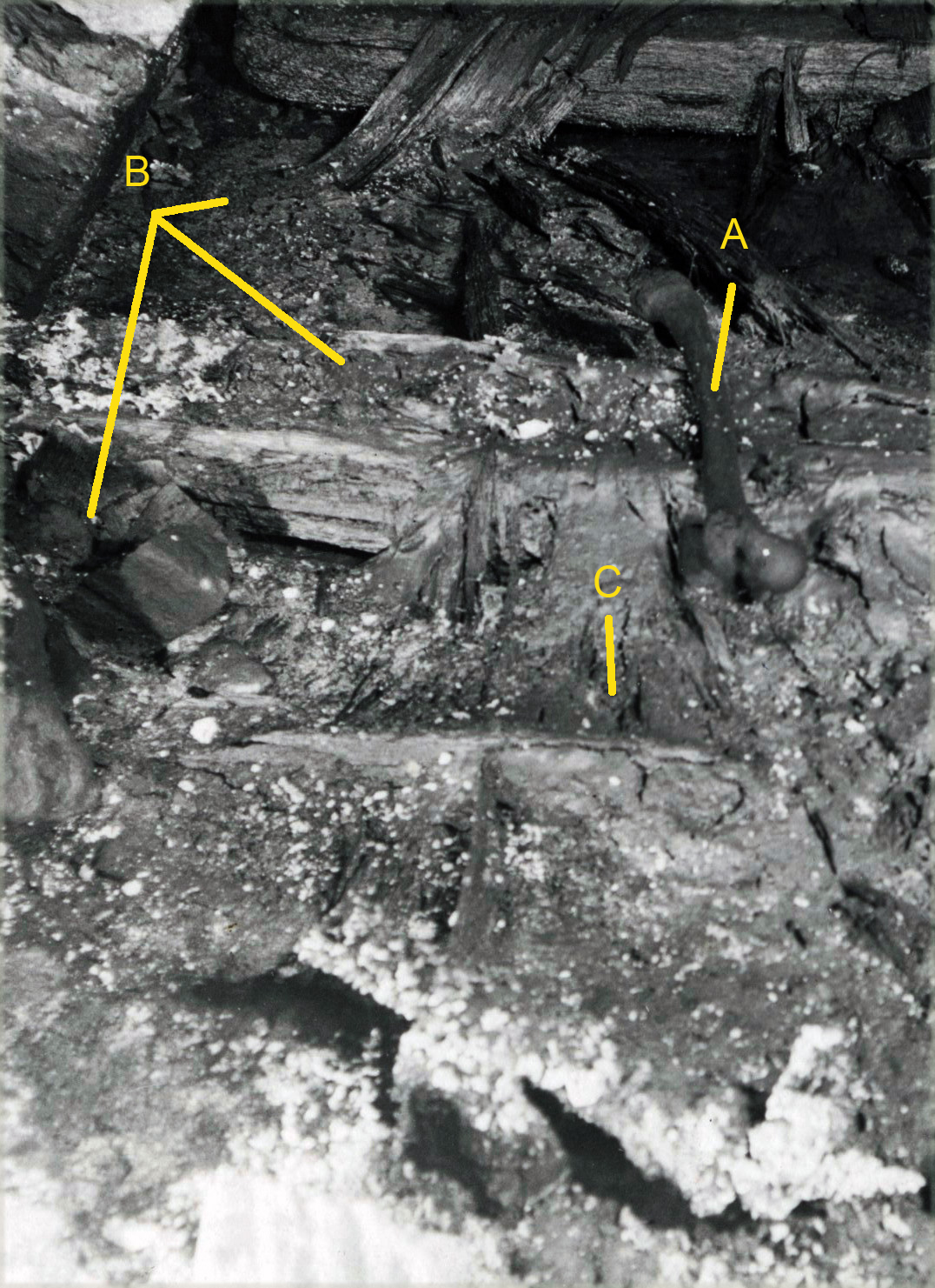 8 pav. Karalių kripta. Vaizdas tarp šiaurinės kriptos sienos ir Aleksandro Jogailaičio palaikų. Spėjama pirmojo karsto vieta. Fot. aut. J. Bulhakas. 1931 m. (LVIA 1135-3-308 (26) fragmentas): A – Aleksandro Jogailaičio šlaunikaulis, B – nurinktos vietos prie šiaurinės kriptos sienos, C – karsto dugnas (?)