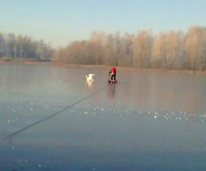 Gulbe isalusi ezere_Siauliu regiono aplinkos apsaugos departamento nuotr.