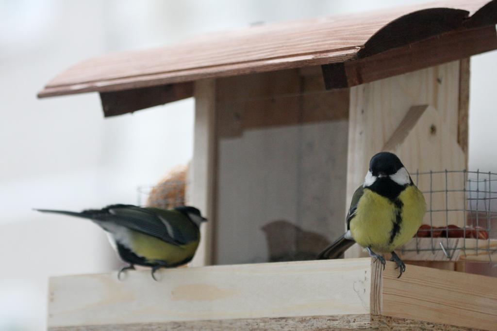 NamelisLesykla_birdlife.lt nuotr.