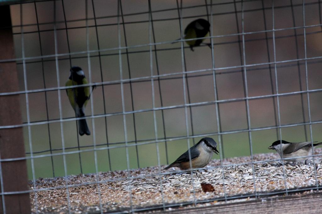 StacionariosLesyklosPauksciai_birdlife.lt nuotr.