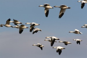 billofthebirds.com nuotr.