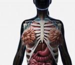 zmogus anatomija lasteles_mokslosriuba.lt