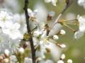 Bite zieduose1_alkas.lt nuotr