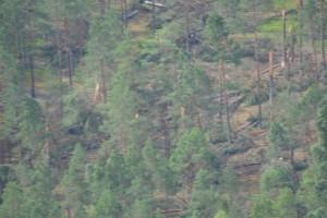 Nuo audros nukentėję miškai | AM.lt nuotr.