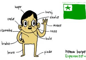 esperanto-memrise.com-nuotr