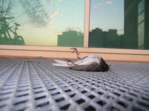 birdsmack.com nuotr.