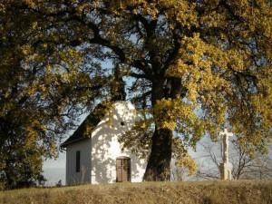 Europos 2016 m. medis – vengrų Bataszeko ąžuolas  | AM.lt nuotr.