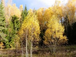 Ruduo miške | D. Vaiškūnienės nuotr., alkas.lt