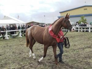 Trakėnų žirgas | wikipedia.org nuotr.