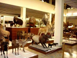 Kauno zoologijos muziejus