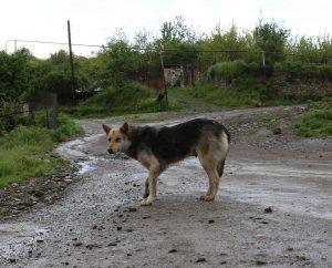 Šuo | Alkas.lt, A. Sartanavičiaus nuotr.