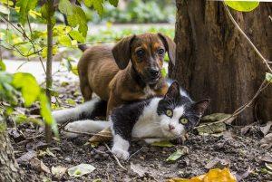 šuo ir katė | pixabay.com nuotr.