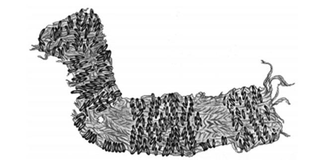 Paukstis_R. Sirouchovo rekonstrukcinis pies