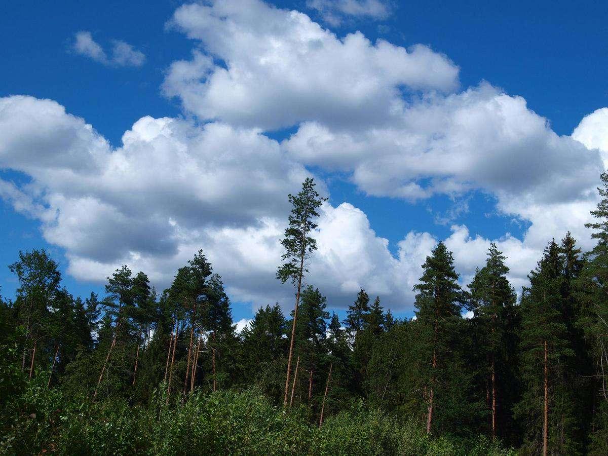 Pasvaigės miškas, Telšių r. | Autorės nuotr.