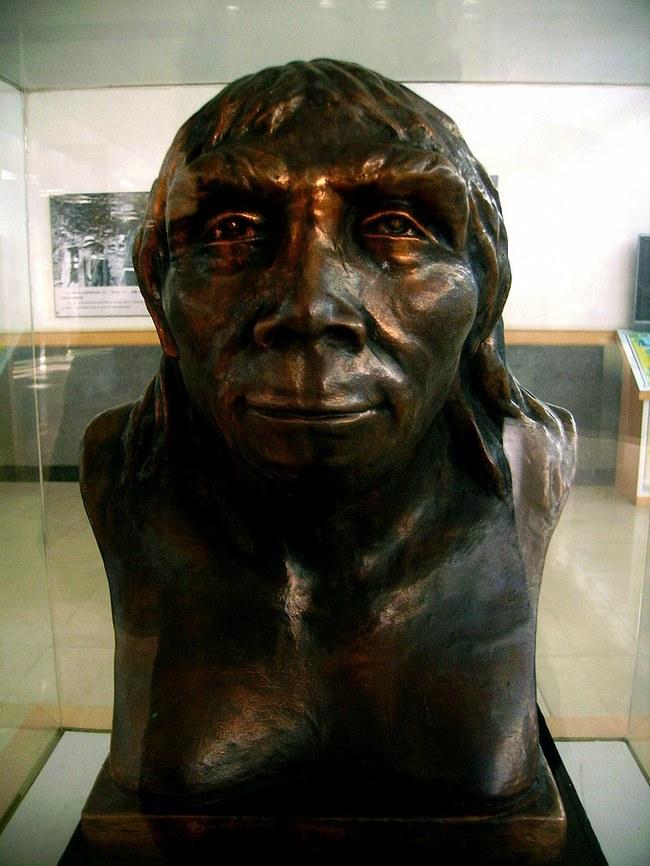 Pekino žmogaus biustas muziejuje | Wikipedia.org