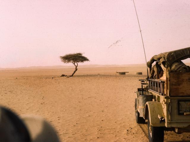 Tenerės medis 1961 m. | Wikipedia.org