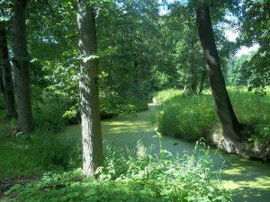 Garuozės upelis Garuozos dvaro parke | Alkas.lt, T. Baranausko nuotr.