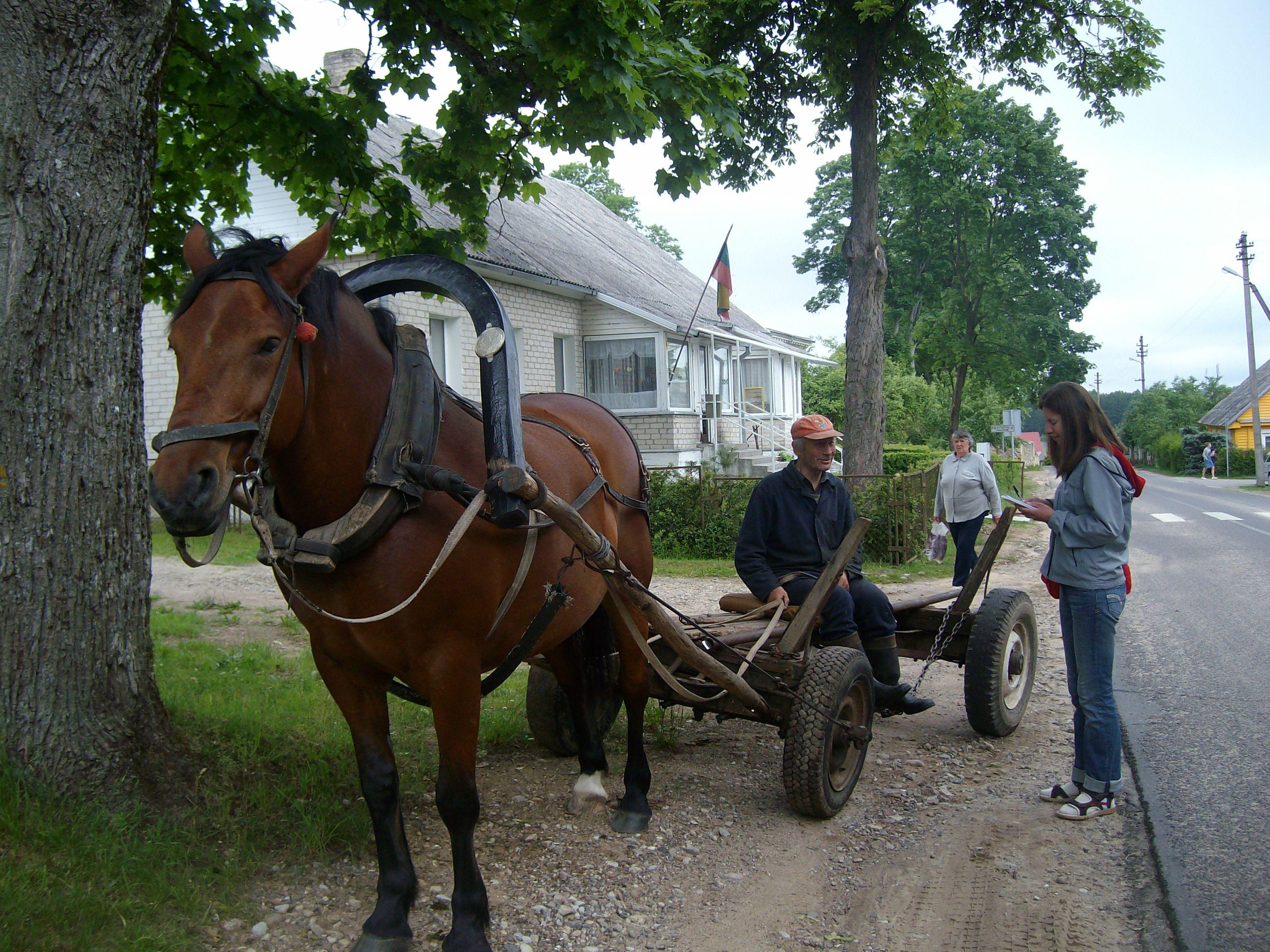 Nuo blogų akių šį arkliuką saugo prie kamanų iš abiejų pusų pritvirtinti raudoni bumbulai. 2010 m. Trakų rajono Onuškio miestelis | Asmeninė nuotr.