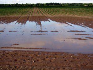 Kazys Starkevičius kreipiasi į Vyriausybę ragindamas nenuvilti žemdirbių | Pixabay nuotr.