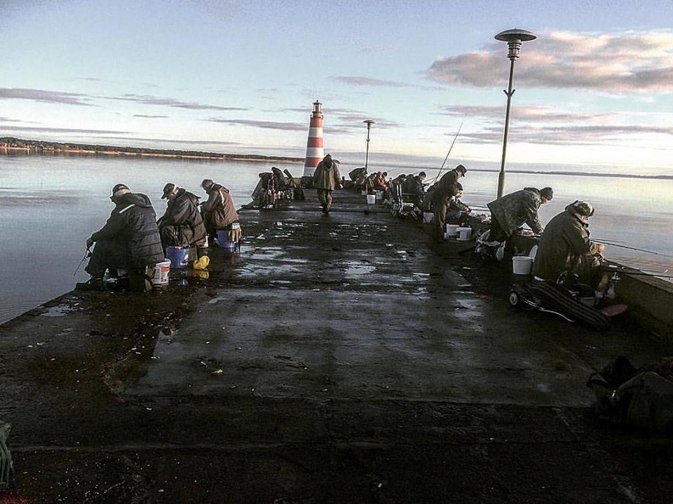 Žvejai Nidoje ant molo gaudo stintas | E. Baltranaitės nuotr.