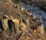 Pilaitės miškas | pilaitesbendruomene.lt nuotr.