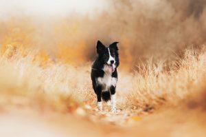 Apie naminių gyvūnų imunitetą | Pixabay nuotr.