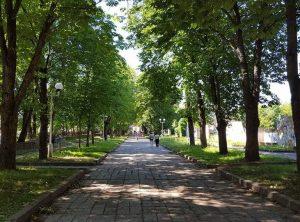 Reikalaujama išsaugoti senuosius medžius Šiaulių Kaštonų alėjoje | siauliugidas.lt nuotr.