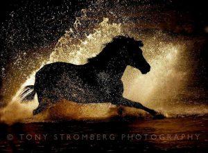 Tonio Strombergo nuotr.