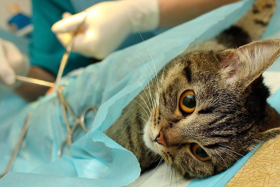 Katės sterilizacija | A.Dagilienės asmen. nuotr.