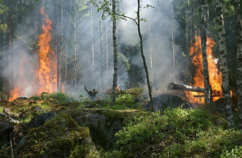 Dega miškas | am.lt nuotr.