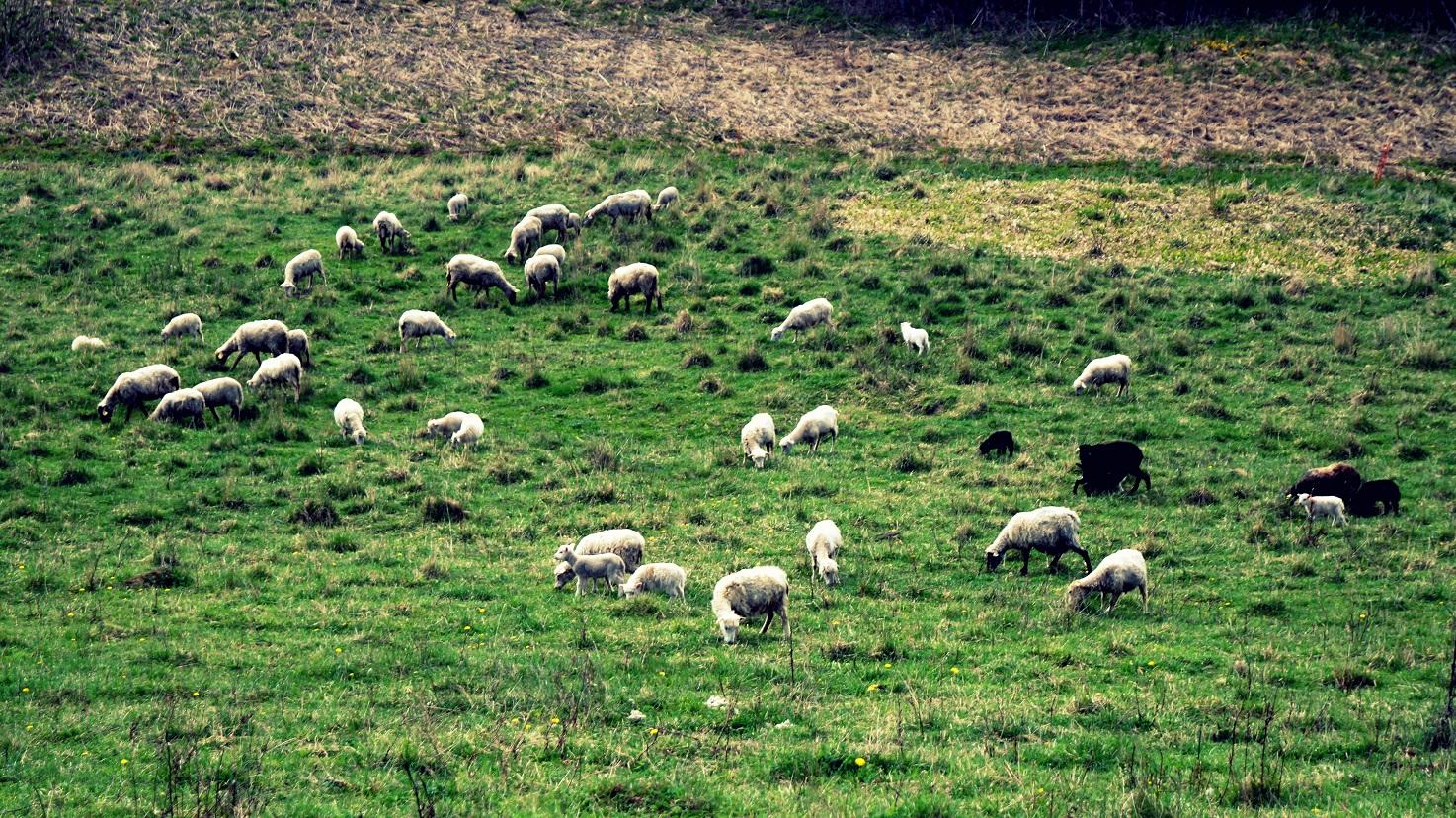 Verslavos piliakalnio šienavimas aviu pagalba_Radiniai iš Sokiškių piliakalnio_Sartų ir Gražutės regioninių parkų direkcijos nuotr
