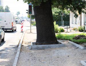 Garliavos dilema: kas svarbiau – ąžuolas, žmonės ar kvadratinis metras žemės? | Kauno rajono savivaldybės nuotr.