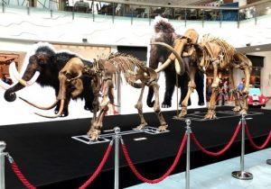 Nemokama ledynmečio milžinų skeletų paroda | Rengėjų nuotr.