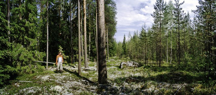 Suomija. Privatus išsaugotas miškas