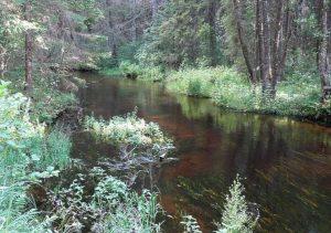 Peršokšna, miško upė | A. Gaidamavičiaus nuotr.