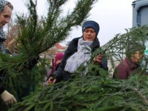 Eglių šakos kalėdoms | am.lt nuotr.