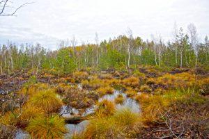 Sacharos pelkė Rokiškio raj. | life-peat-restore.eu nuotr.