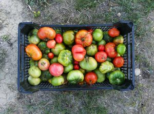 Ekologiškos daržovės | Pixabay nuotr.