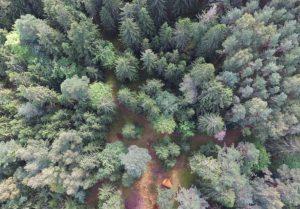 Miškas iš aukštai | am.lt nuotr.