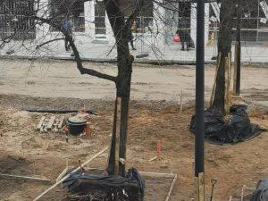 Sužalotos liepos Kauno Laisvės alėjoje | am.lt nuotr.
