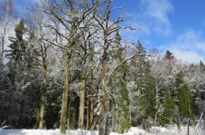 Liepijų miškas | vstt.lt nuotr.
